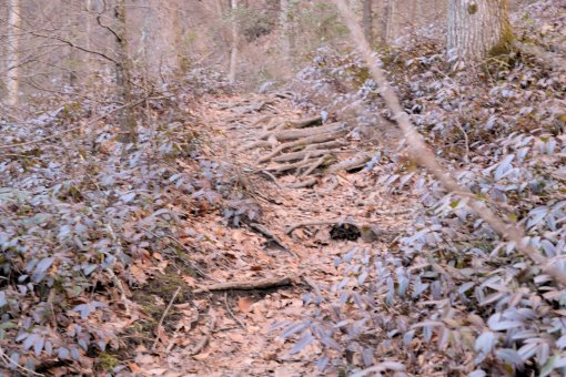 6 Roaring Fork and Setrock Creek Falls, Mount Mitchell-Nikon D3100126