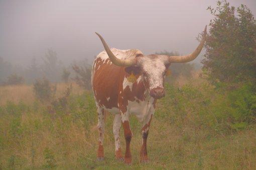 2013-08-17-Grayson Highlands State Park-Massie Gap-Nikon D310072