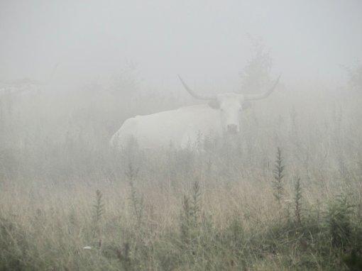2013-08-17-Grayson Highlands State Park-Massie Gap-Sony Cybershot DSC-HX200V142
