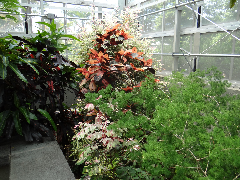 2014 06 22 Daniel Stowe Botanical Gardens   Sony Cybershot HX200V393