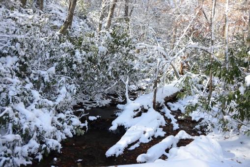 2014-11-02-Rich Mountain Trail and Trout Lake-Nikon D600129