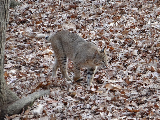 2014-11-21-Bays Mountain Lakeside Trail and Babies-Sony Cybershot DSC-HX200V10