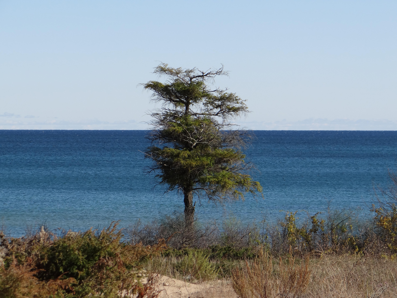 Ellison Bay, WI – Newport State Park | Ranger Annette