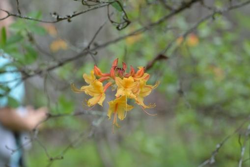 2016-04-23-North Carolina Arboretum-NIKON CORPORATION-NIKON D600-102