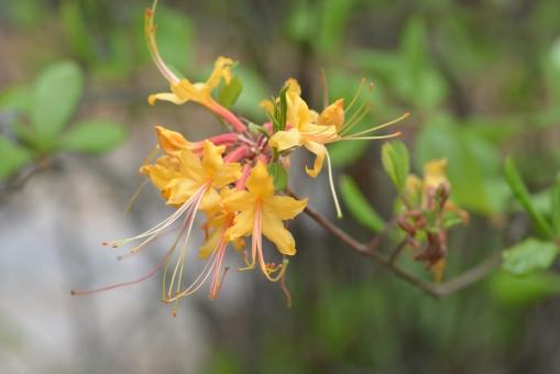 2016-04-23-North Carolina Arboretum-NIKON CORPORATION-NIKON D600-59