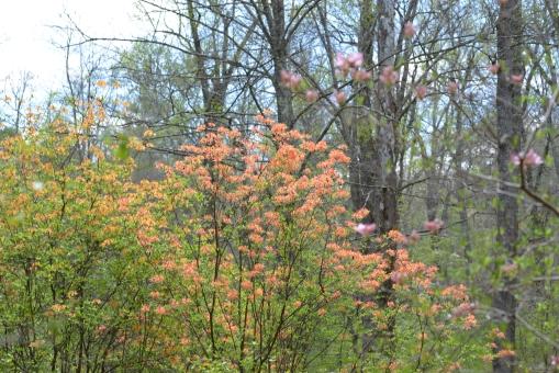 2016-04-23-North Carolina Arboretum-NIKON CORPORATION-NIKON D600-87
