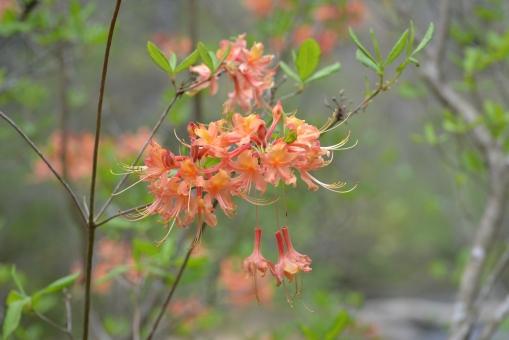 2016-04-23-North Carolina Arboretum-NIKON CORPORATION-NIKON D600-95