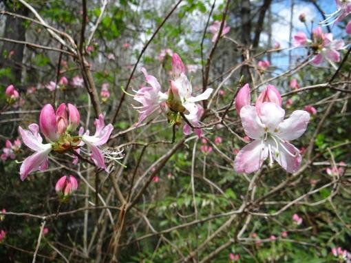 2016-04-23-North Carolina Arboretum-SONY-DSC-HX200V-213