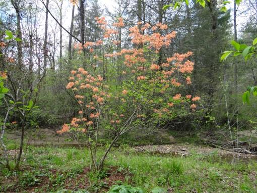2016-04-23-North Carolina Arboretum-SONY-DSC-HX200V-231