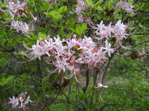 2016-04-23-North Carolina Arboretum-SONY-DSC-HX200V-239