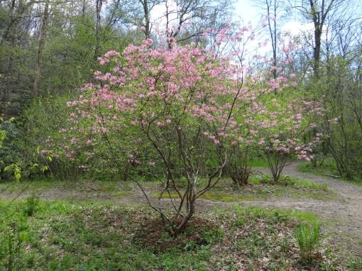 2016-04-23-North Carolina Arboretum-SONY-DSC-HX200V-240