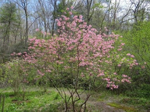 2016-04-23-North Carolina Arboretum-SONY-DSC-HX200V-242