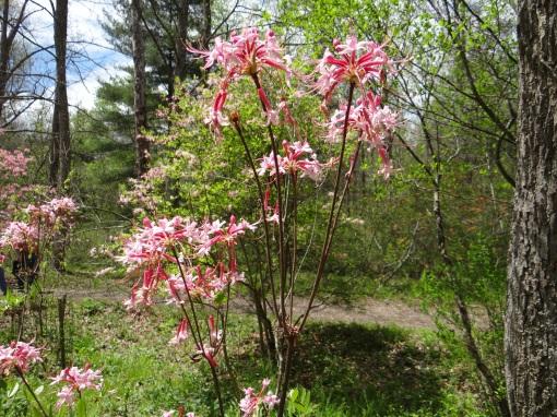 2016-04-23-North Carolina Arboretum-SONY-DSC-HX200V-257