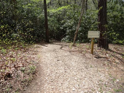 2016-04-23-North Carolina Arboretum-SONY-DSC-HX200V-263