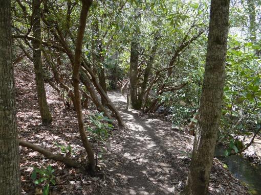 2016-04-23-North Carolina Arboretum-SONY-DSC-HX200V-264