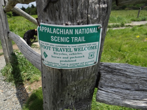2016-06-12-roan-mountain-trails-sony-dsc-hx200v-240