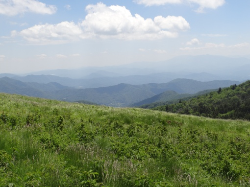 2016-06-12-roan-mountain-trails-sony-dsc-hx200v-306