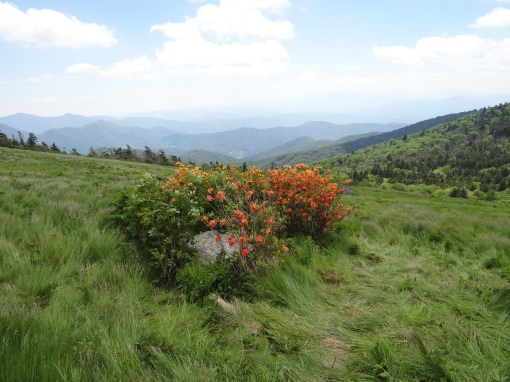 2016-06-12-roan-mountain-trails-sony-dsc-hx200v-310