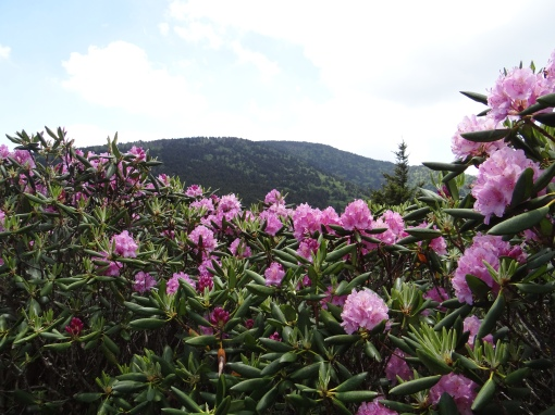 2016-06-12-roan-mountain-trails-sony-dsc-hx200v-337
