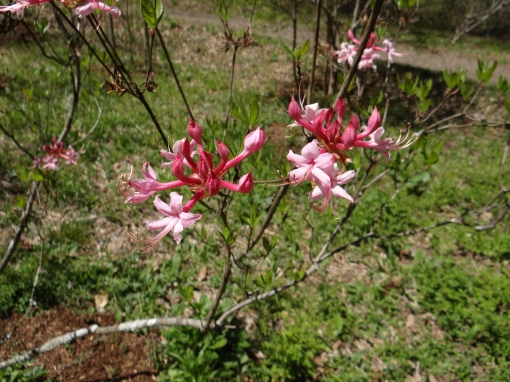2016-04-16-North Carolina Arboretum Orchid Festival-SONY-DSC-HX200V-456
