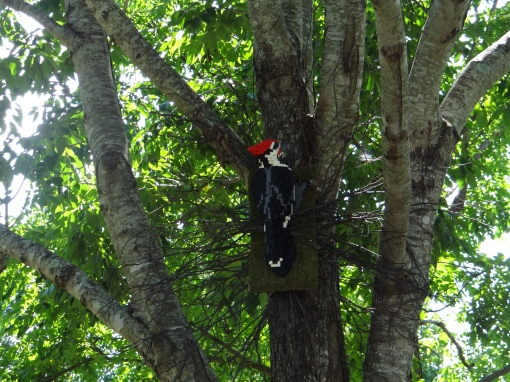 14-pileated-woodpecker